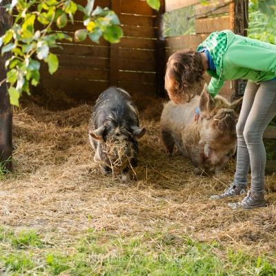 HEIJBLOM FOTOGRAFIE-knuffelen-met-beroemde-varkens-op-de-Peerdegaerdt-